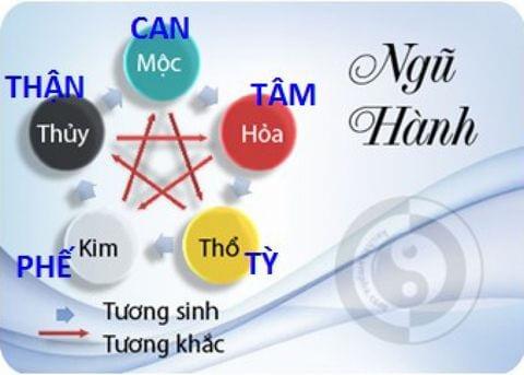 Gốc bệnh hen nằm ở Tỳ - Phế - Thận
